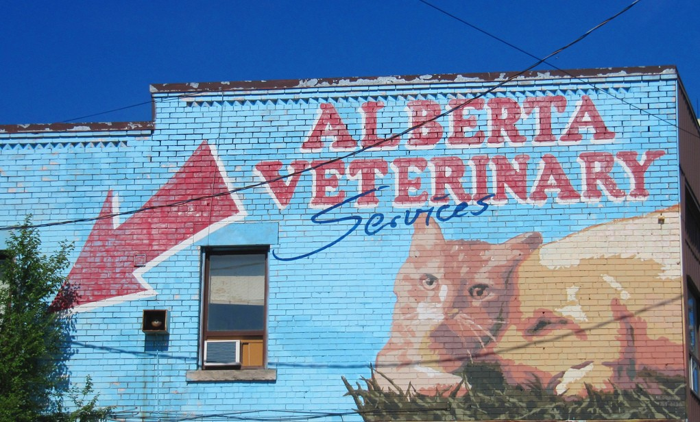Posicionamiento web para veterinarios