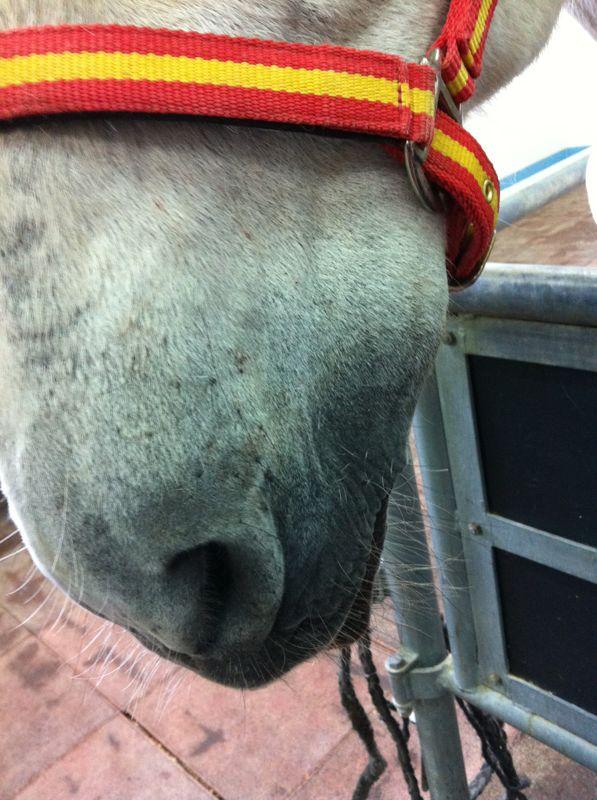 masa_caballo